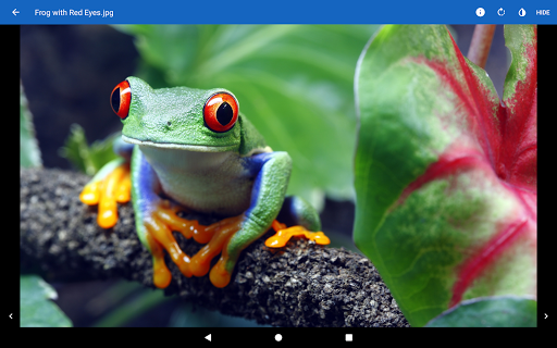 File Viewer for Android screenshot 12