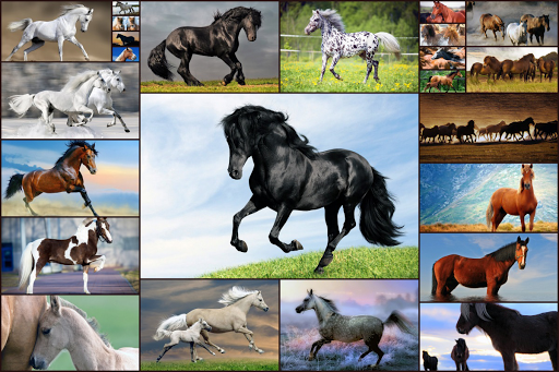 Horse Jigsaw Puzzles Game - For Kids & Adults 🐴 screenshot 1