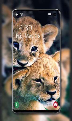 Lion Wallpaper 🦁 screenshot 6