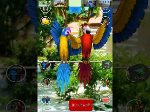 Talking parrot couple app on android mobile and game