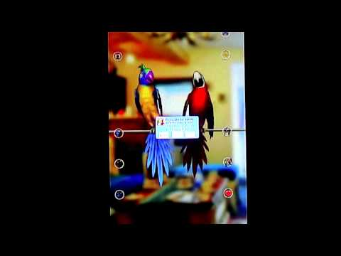 Talking Parrot Couple Free Android Gameplay