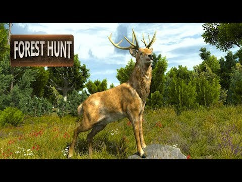 Wild Animal Jungle Hunt - Forest Sniper Hunter Android Gameplay ᴴᴰ
