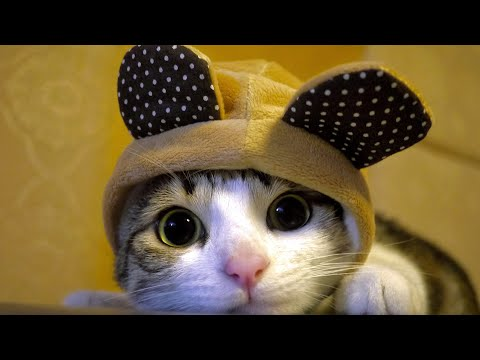 CUte and Kitty Cat #2 :)