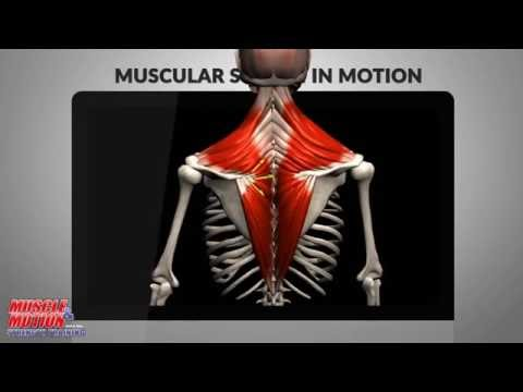 video review of Anatomy by Muscle & Motion