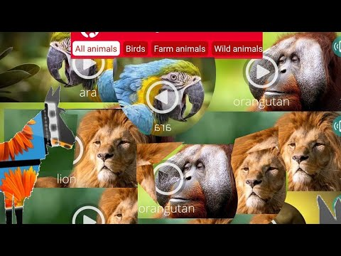 Best  Android apps for animal and bird sounds and their names