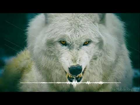 🎼Wolf Howling Ringtone | Wolf Sound Effect _ by the mobile ringtone