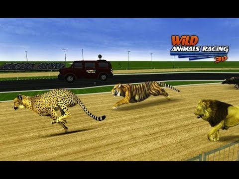 Wild Animals Racing 3D - Android Gameplay #1   DishoomGameplay