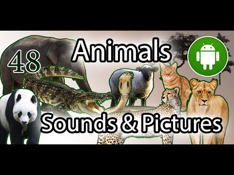 Learn Animals Name Animal Sounds Animals Pictures Android