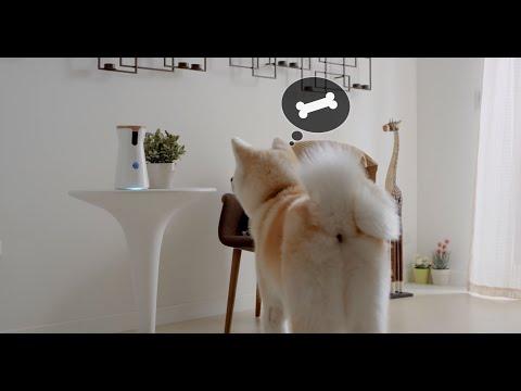 video review of Furbo-Treat Tossing Dog Camera