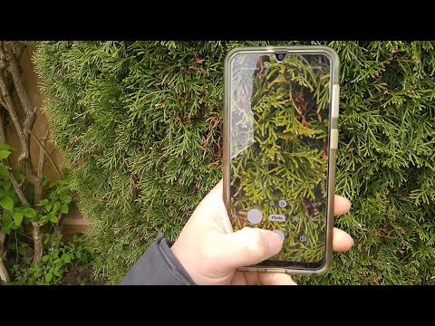 How to Use the LeafSnap App