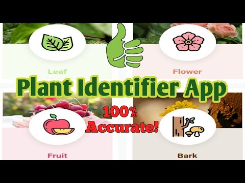 How To Identify a Plant Using Android Phone | LEAFSNAP PLANT IDENTIFIER