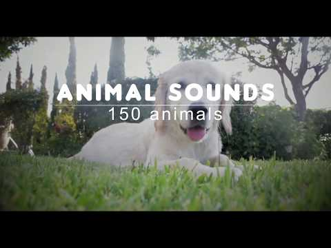 video review of Animal Sounds