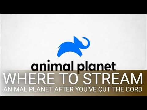 Where to Stream Animal Planet After You've Cut the Cord